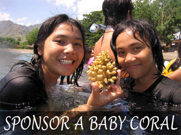 babycoral